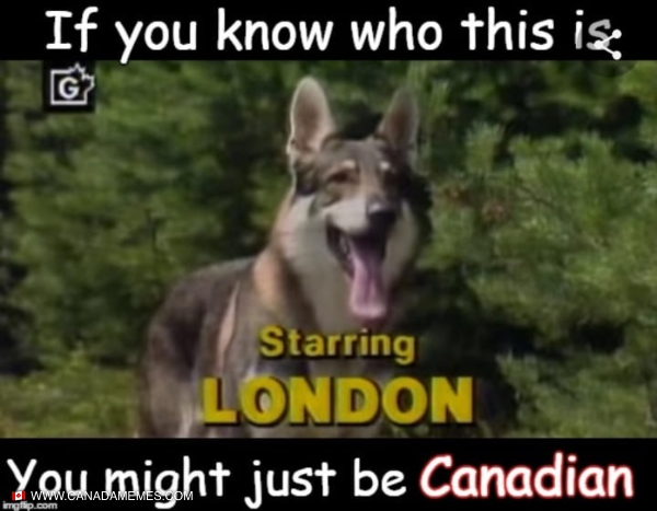 Who else remembers the littlest hobo?