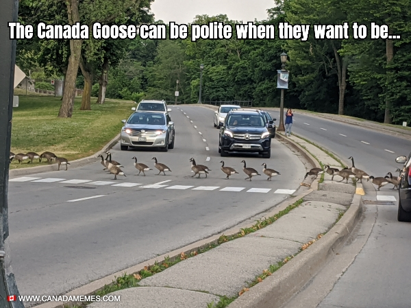 They are polite when they want to be...