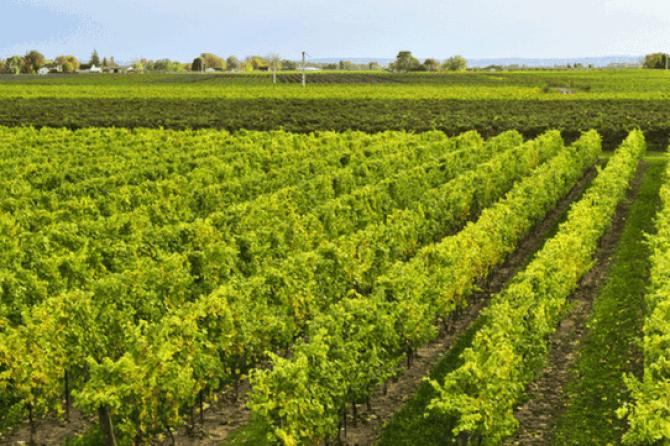 Ontario's Wine Route
