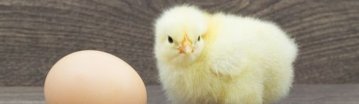chicken-or-egg-1200x330