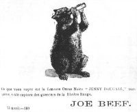 "[An illustration of the beer-drinking bear ""Jenny Dougall"", owned by McKiernan, named after John Dougall.]"