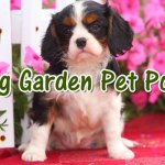 10 Pet Poisons Lurking in Your Spring Garden