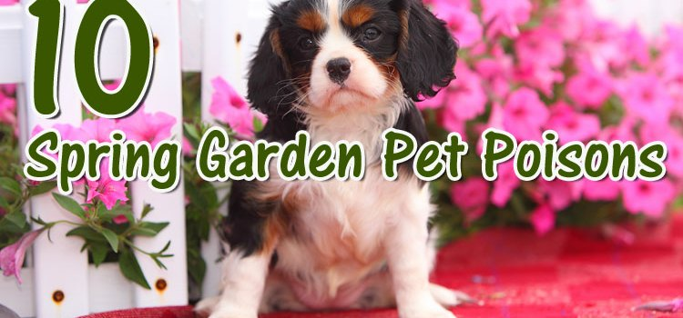 10 Pet Poisons Lurking in Your Spring Garden ©