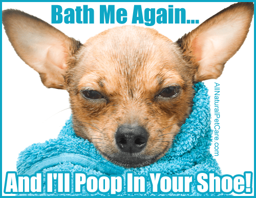 Dog Hates Bath Meme