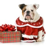 Canadian Gift Guide for Pets and Pet Parents