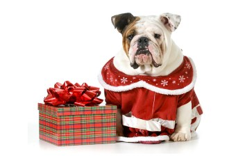 Canadian Gift Guide: Pets and Pet Parents