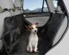 Pet Car Seat Cover Hammock