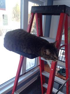 Cat & Ladders