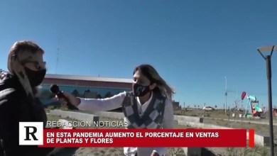 Photo of Redacción Noticias |  AUMENTO EN LA COMPRA DE PLANTAS EN ESTA PANDEMIA – LAS HERAS SANTA CRUZ