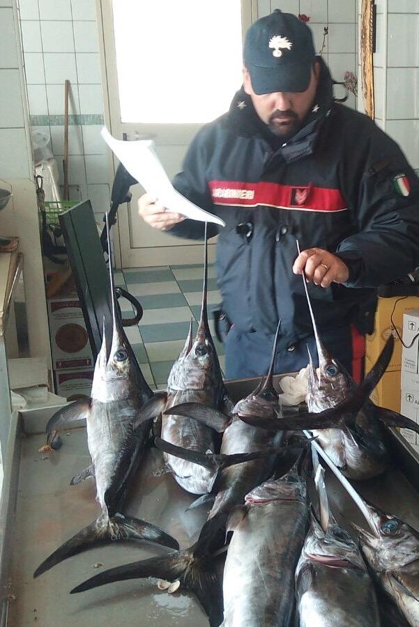Sequestrato pesce non tracciabile e conservato male in un ...