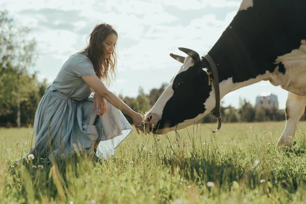 woman in white dress shirt and blue denim jeans standing beside black and white cow on on on on on