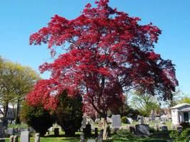 Canarsie Cemetery
