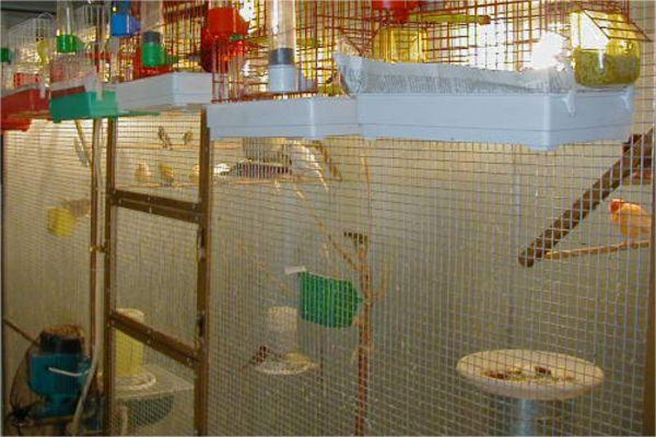 Τα πουλιά μαθαίνουν να πετάνε σε κλούβες μεγάλων διαστάσεων (ύψος 2m X πλάτος 2,5m X βάθος 1,5m)