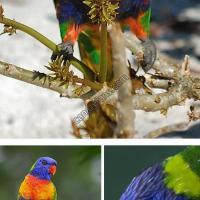 10 طيور غريبة - مترجم