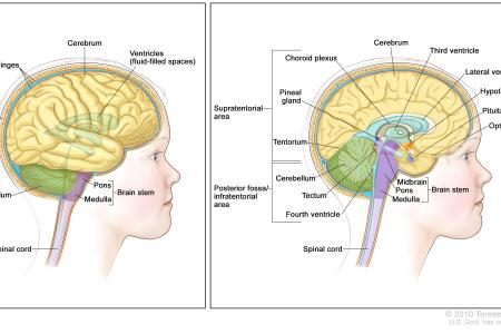 Interior areas of the brain diagram 4k pictures 4k pictures d brain on the app store d brain on the app store ways to draw a brain wikihow learn the different parts of the brain cerebral cortex video khan academy ccuart Image collections