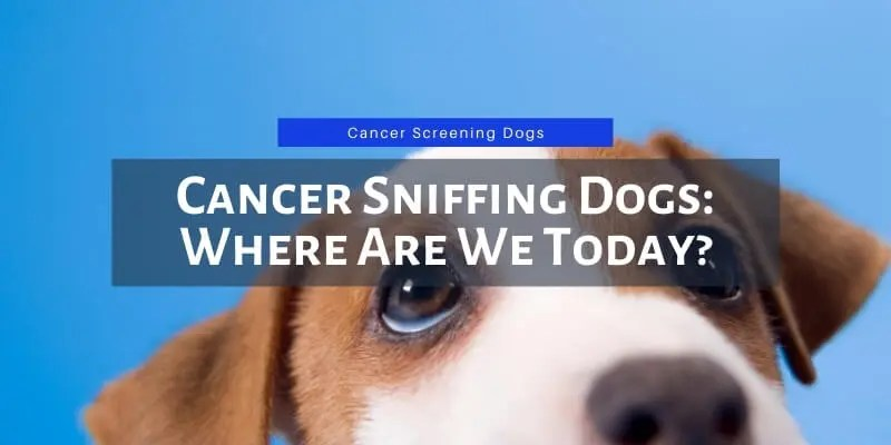 Cancer Sniffing Dogs: Where Are We Today? (2020)