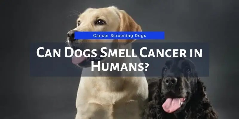 can dogs smell cancer in humans