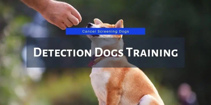 detection dogs training