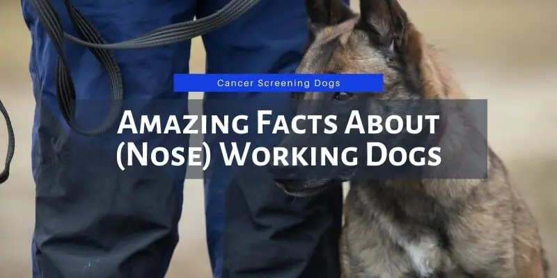 working dogs facts
