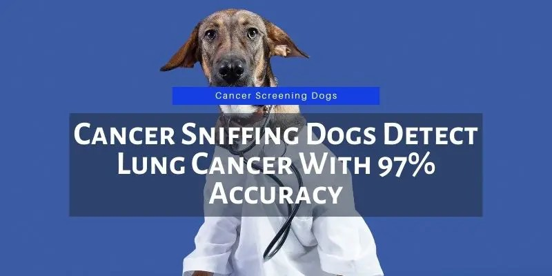 cancer sniffing dogs accuracy