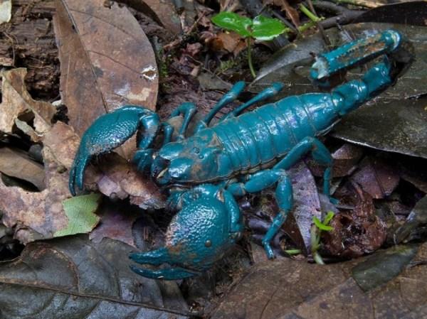 Scorpion Venom A Weapon to Fight Cancer Mihaela