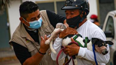 Photo of Logran aplicar mil 490 vacunas a mascotas en Isla Mujeres