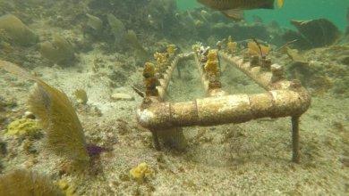 Photo of Trabajan en recuperación de arrecifes afectados por huracanes en Q. Roo