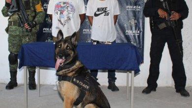 Photo of Unidad Canina sorprende a sujetos con  posesión de 2 armas de fuego en Tulum