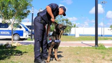 Photo of Unidad canina fortalece la prevención del delito en Solidaridad