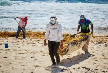 Photo of En solo un mes logran retirar 140 toneladas de sargazo en Cozumel
