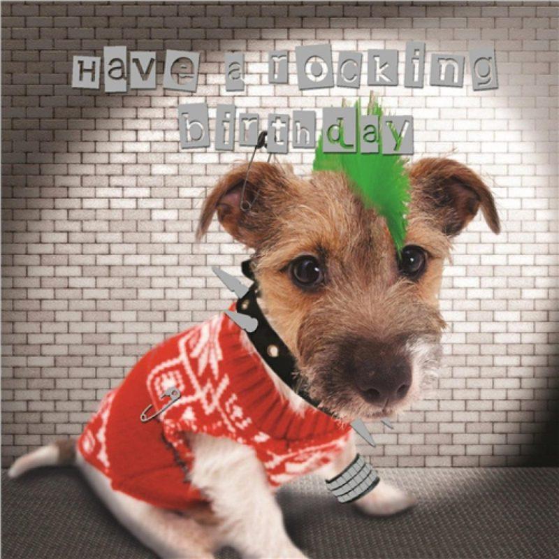 pet pawtrait card punk dog birthday card