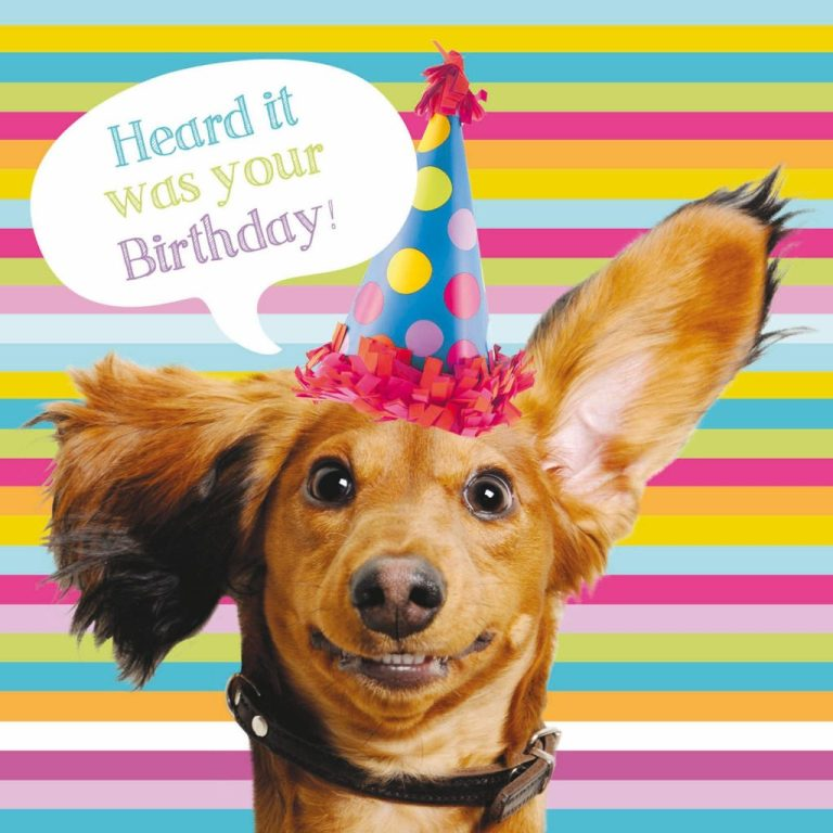 pet pawtrait card sausage dog party birthday card