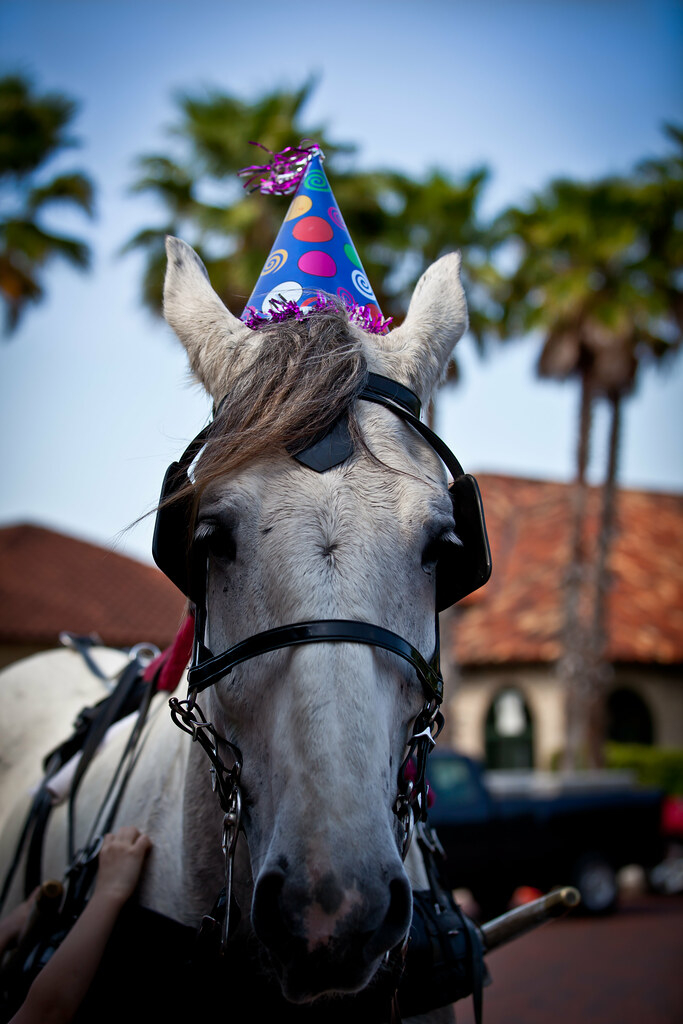 happy birthday horse apparently it was the horses