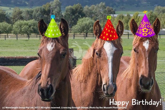 horses birthday explained sconeau sconeau
