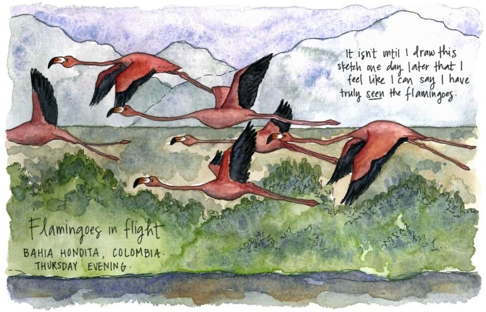 Travel sketch flamingos Colombia