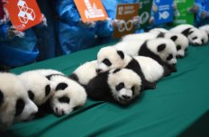 localhost_2015candelaestereo1_images_panda5