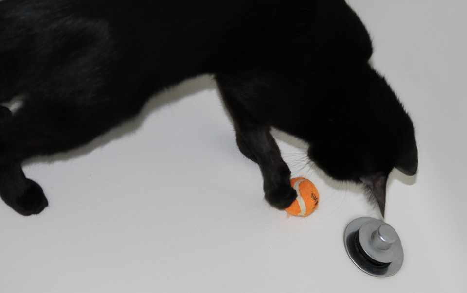 Cat Toys -- Advice Straight From The Cat's Mouth - 3