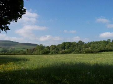 Fields, hills and trees