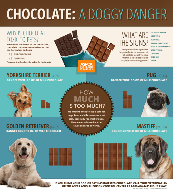 why cant dogs have chocolate