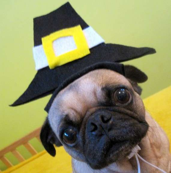Cute Dogs Alert Pics For Some Happy Thanksgiving Cheer