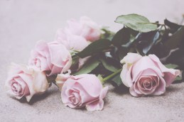 Photo of light pink roses captured by Denver, Colorado freelance photographer Candice Burg.