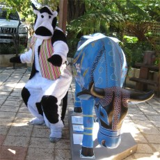 cowsurf