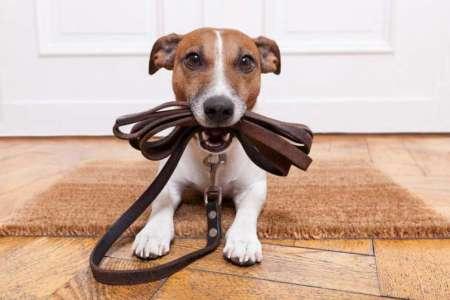 Risultati immagini per cani di proprietà