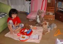 子供と遊ぶヨーキー
