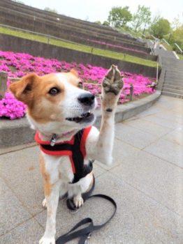 手を上げるひな