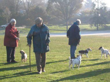 お年寄りと犬たち
