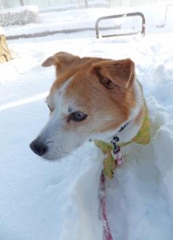 雪の中でスタック中のひな