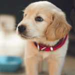 New Puppy Checklist Supplies You Need When Bringing A Puppy Home Canine Campus Dog Daycare Boarding