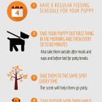 Help How Do I Housebreak My Puppy Caninejournal Com