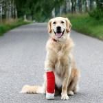 Vet Bills for Older Dogs